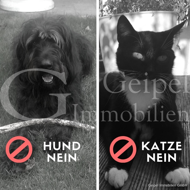 VERMIETET Terrassenwohnung mit Balkon - Hund nein - Katze nein